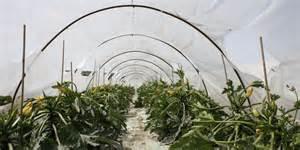 CARRUBI E ZUCCHINE, LOREFICE: «IL GOVERNO INTERVENGA PER SALVAGUARDARE AGRICOLTORI, COLTIVAZIONI EPAESAGGIO»