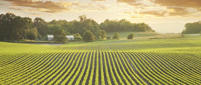 Fondi Pac ai 'veri agricoltori'. Il M5S si fa garante del Made inItaly