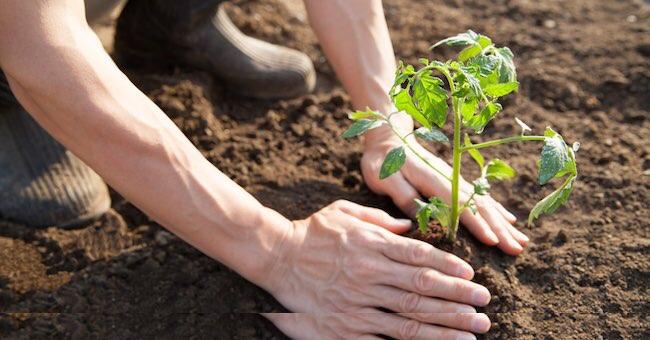 Agroalimentare: 500 mln per Made in Italy. Fondi più alti disempre